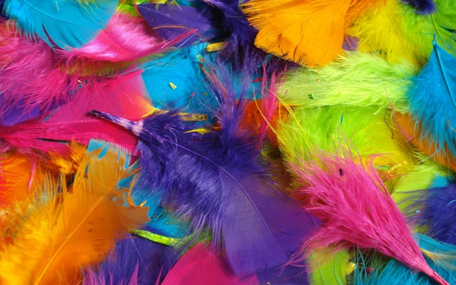 Feathers of all different colors
