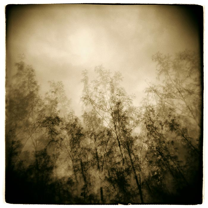 Michael Bryant - trees and cloudy sky